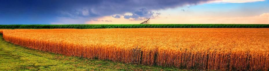 Tani kredyt dla rolników